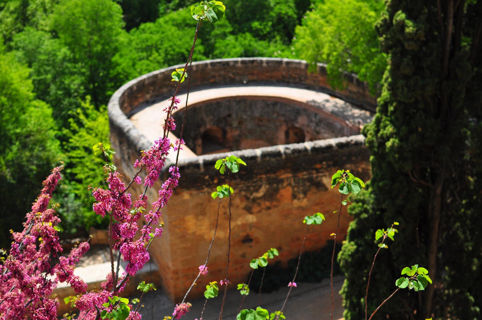 Bajando de la Alhambra